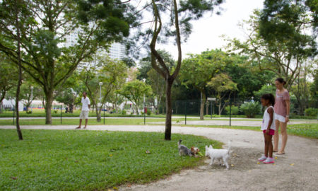 Bishan Park Dog Run | Vanillapup