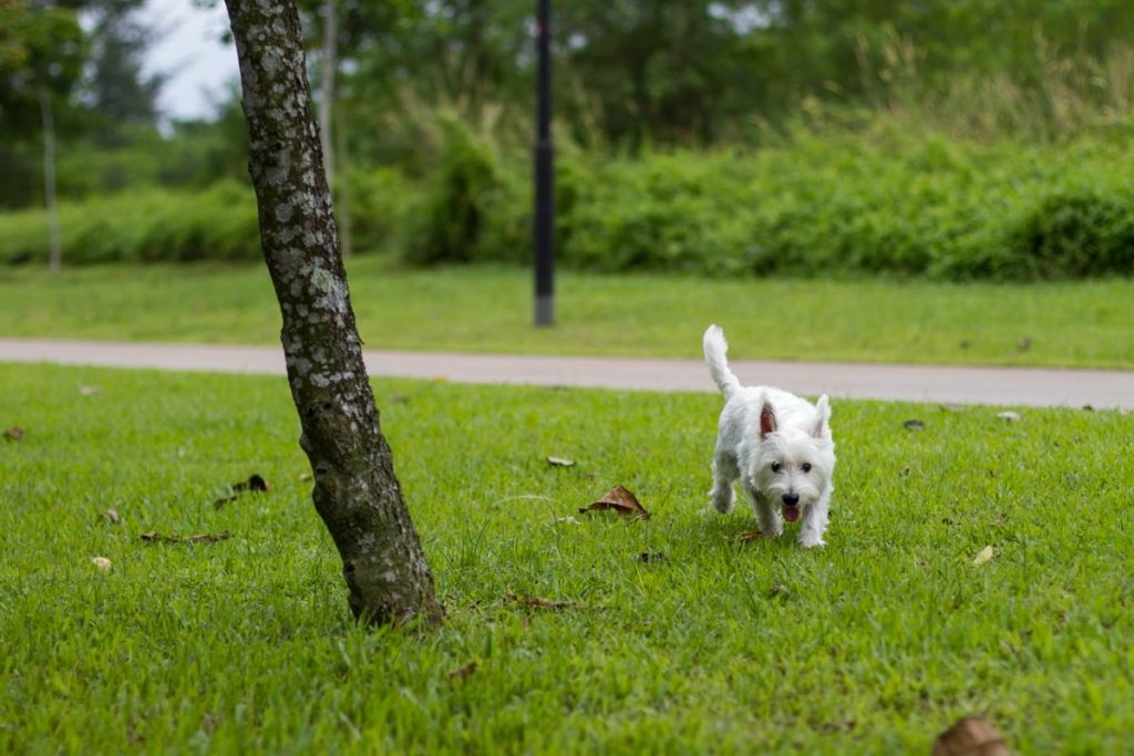 Have a stroll at Punggol with your dog