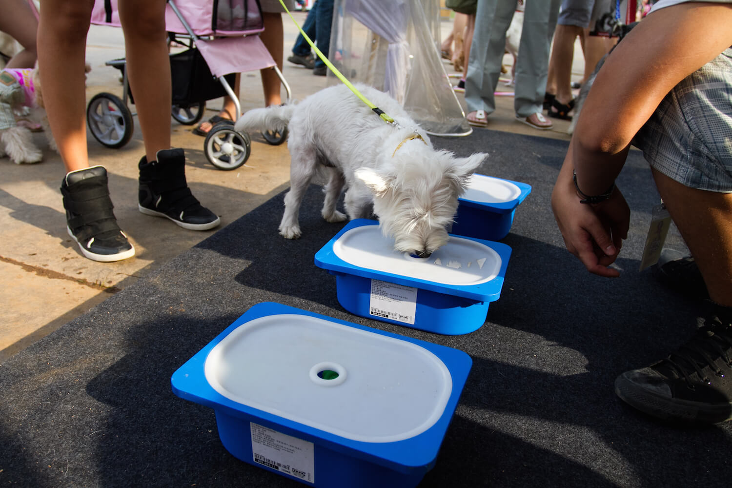 Pets 'n' the City Games | Vanillapup