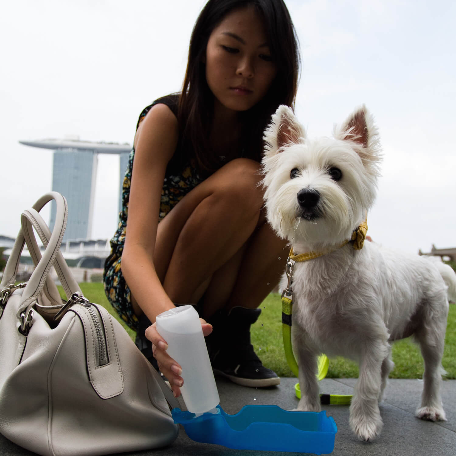 Latte drinking water at Pets 'n' the City | Vanillapup