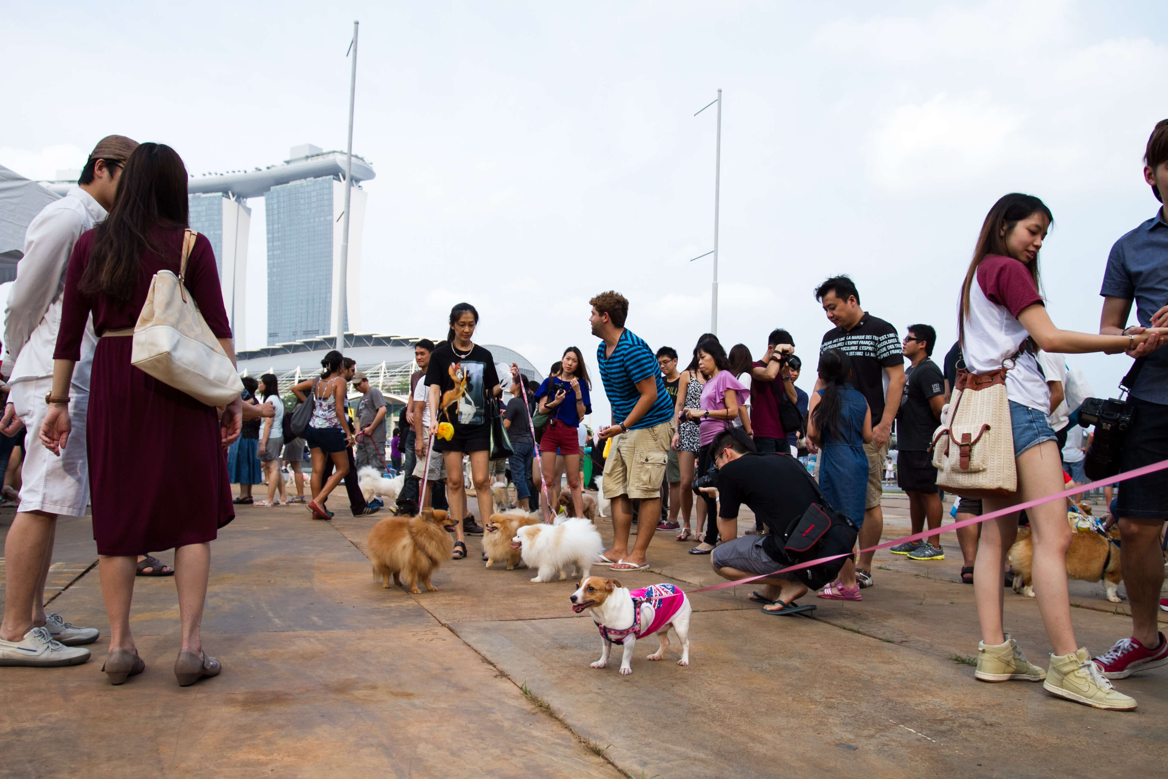 Pets at Pets 'n' the City | Vanillapup
