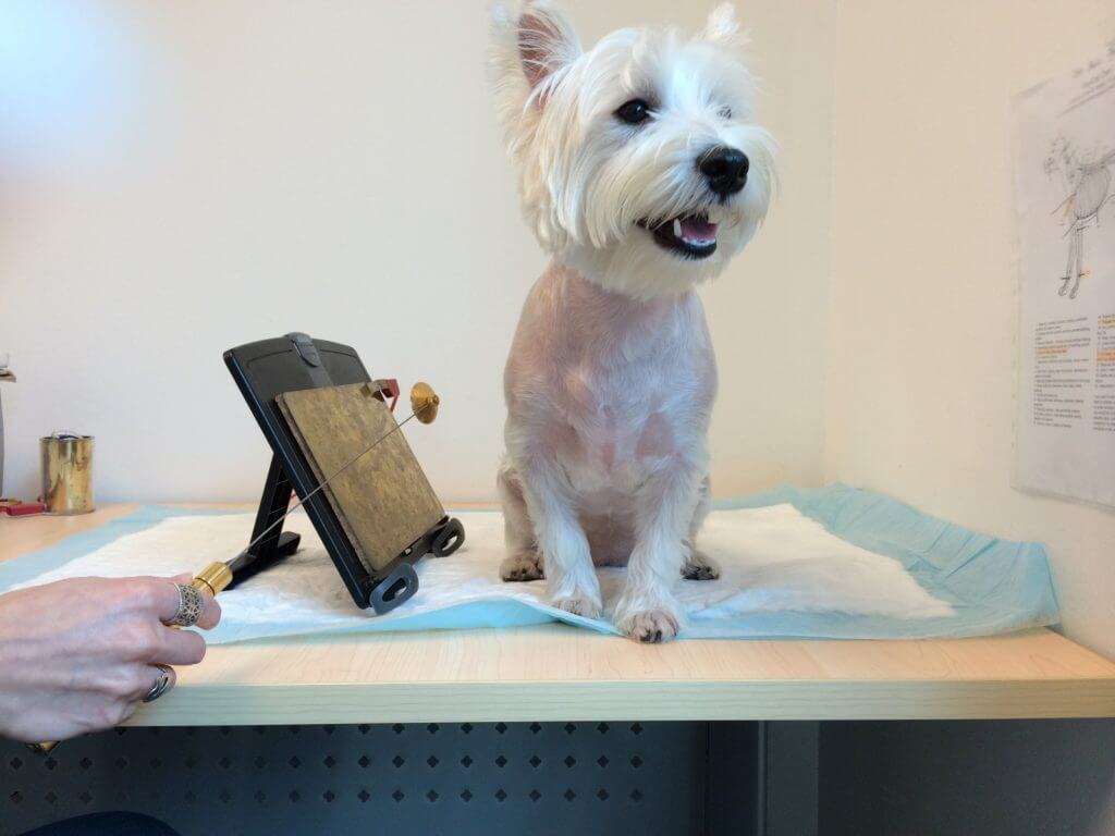 Our Review On Bioresonance Allergy Test For Dogs