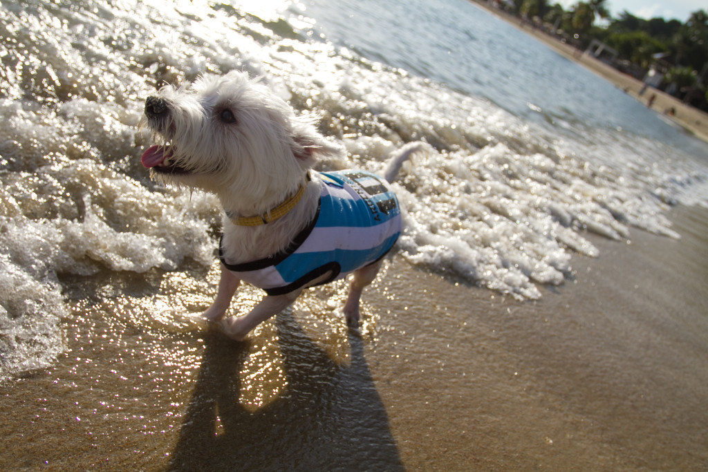 Dog-friendly Tanjong Beach, Sentosa | Vanillapup