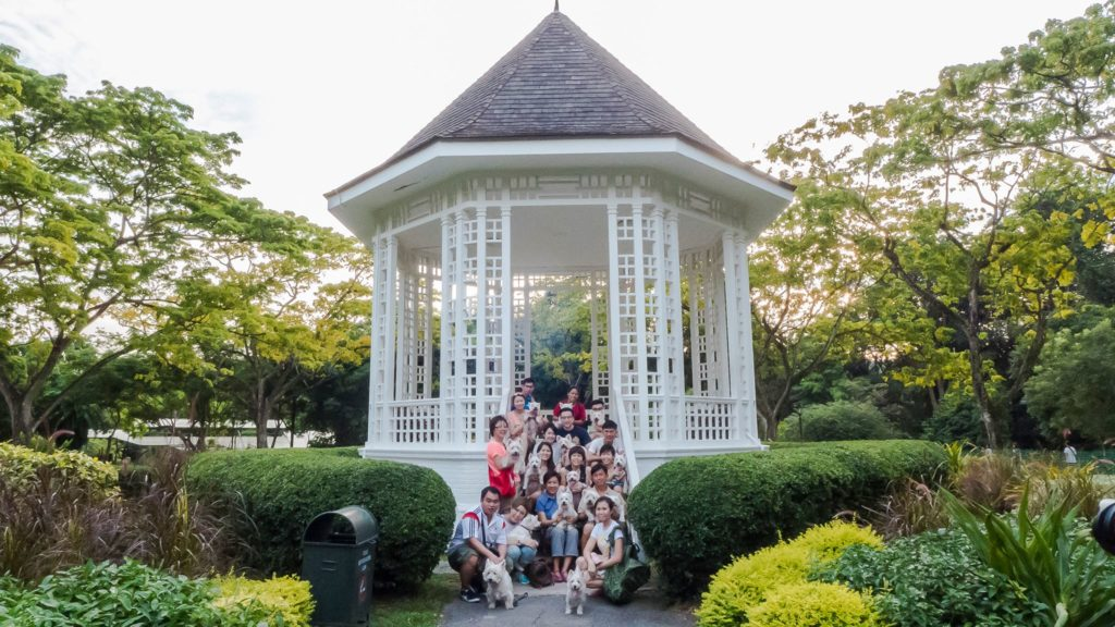 Singapore Westies Club Outing | Vanillapup
