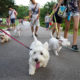 Singapore Westies Outing | Vanillapup