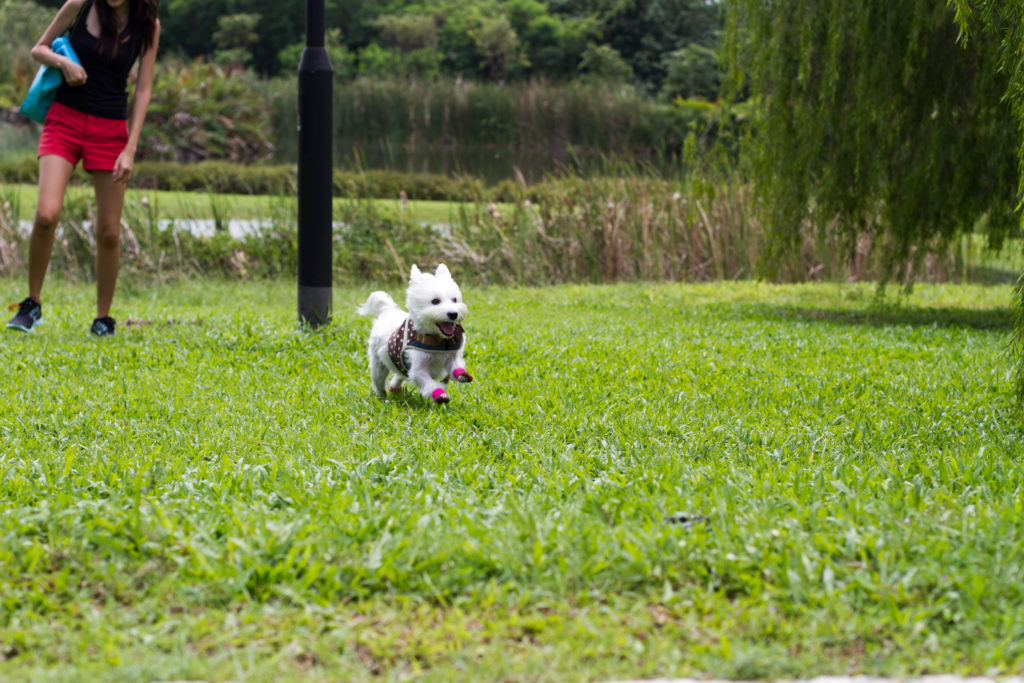 Dog-friendly Seng Kang Riverside Park | Vanillapup