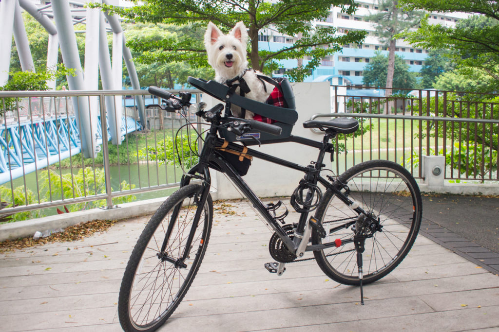 Buddyrider Dog Bicycle Seat |Vanillapup Picks