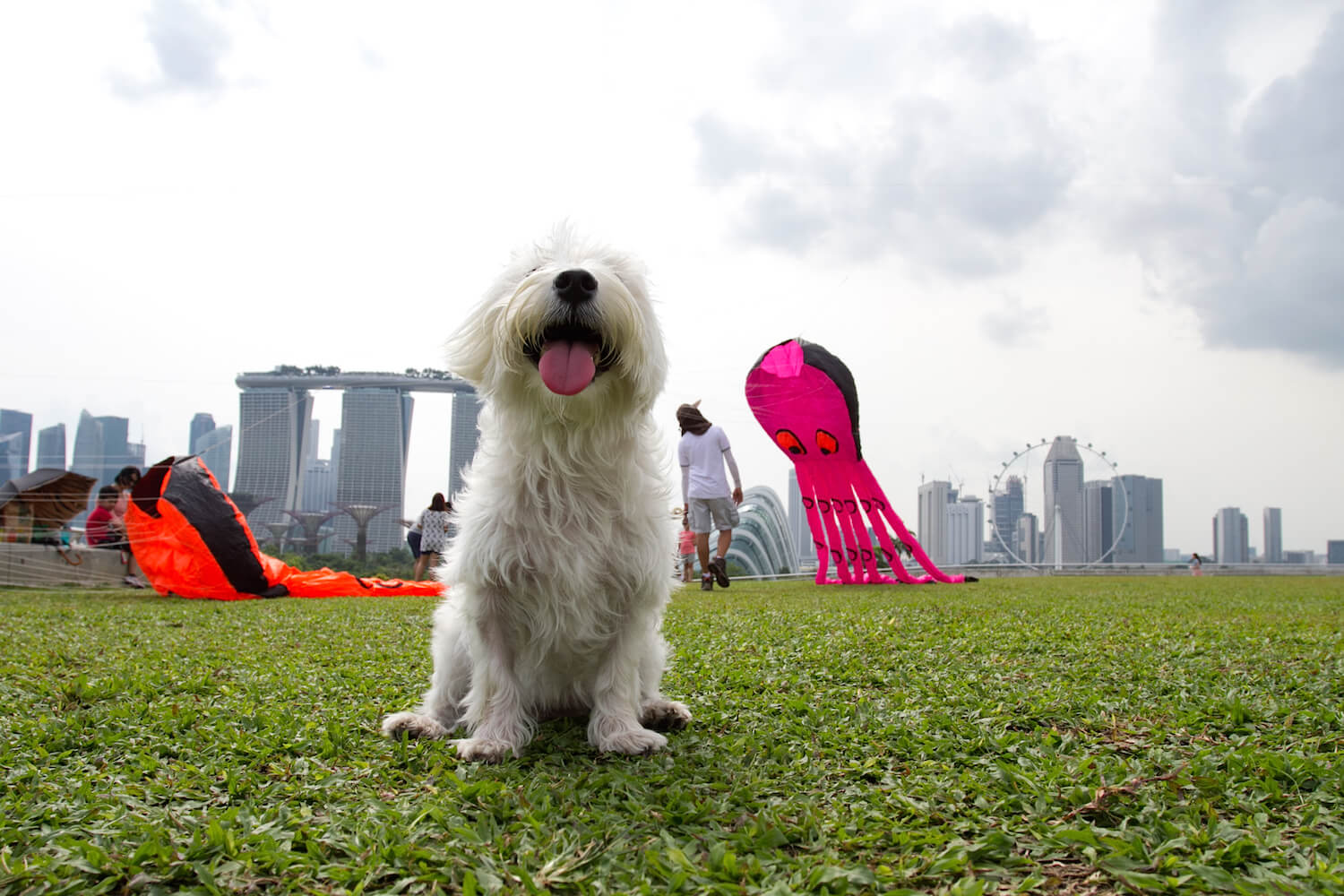 Latte and Kites at Marina Barrage | Vanillapup