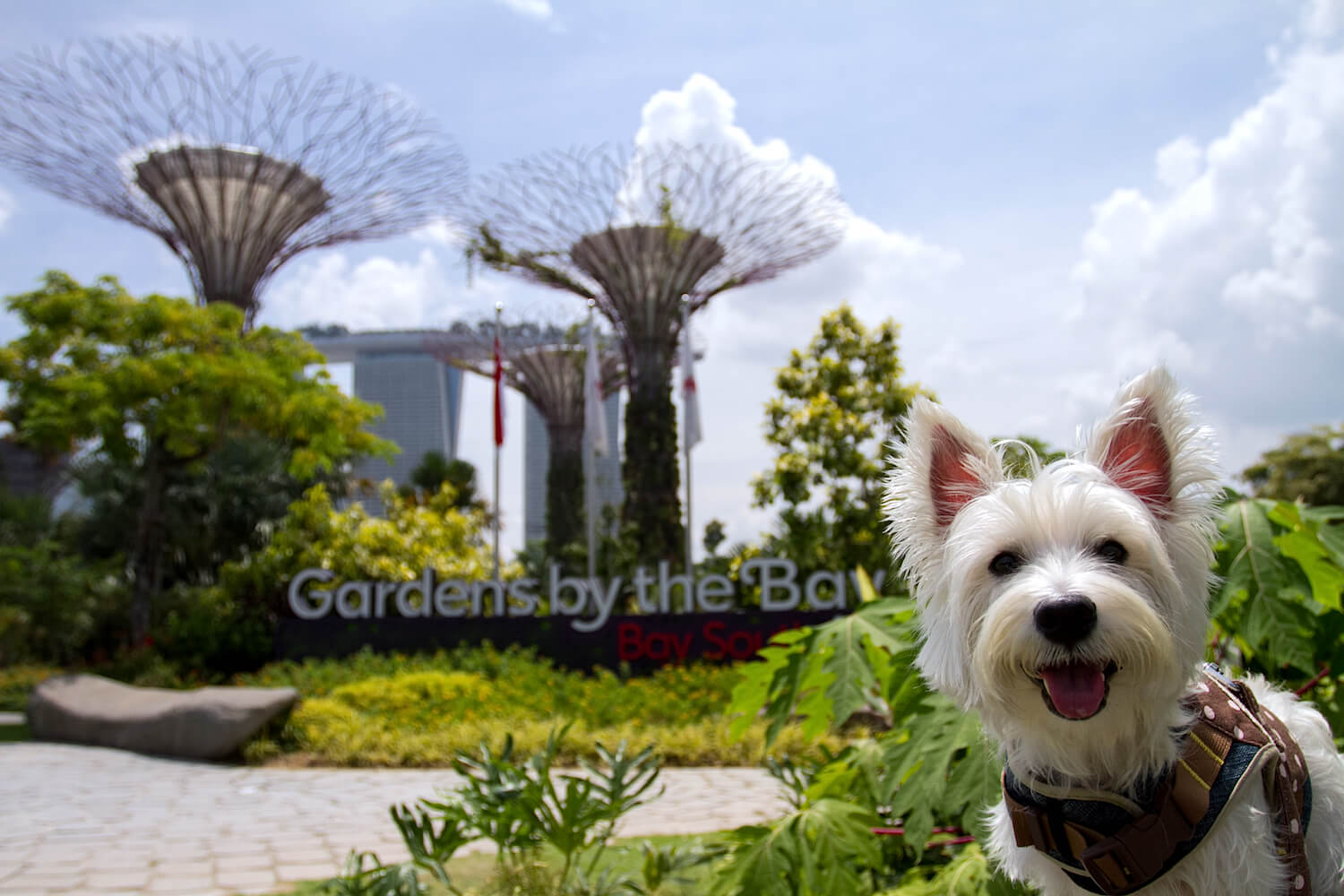 Latte at Gardens by the Bay | Vanillapup
