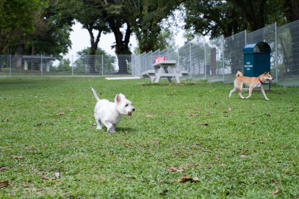 Sembawang Park Dog Run | Vanillapup