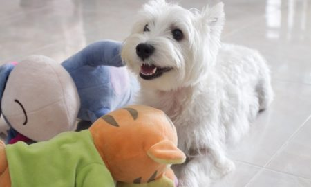 Suitable Toys for Dogs   Vanillapup