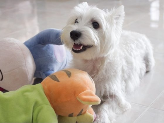 Suitable Toys for Dogs | Vanillapup
