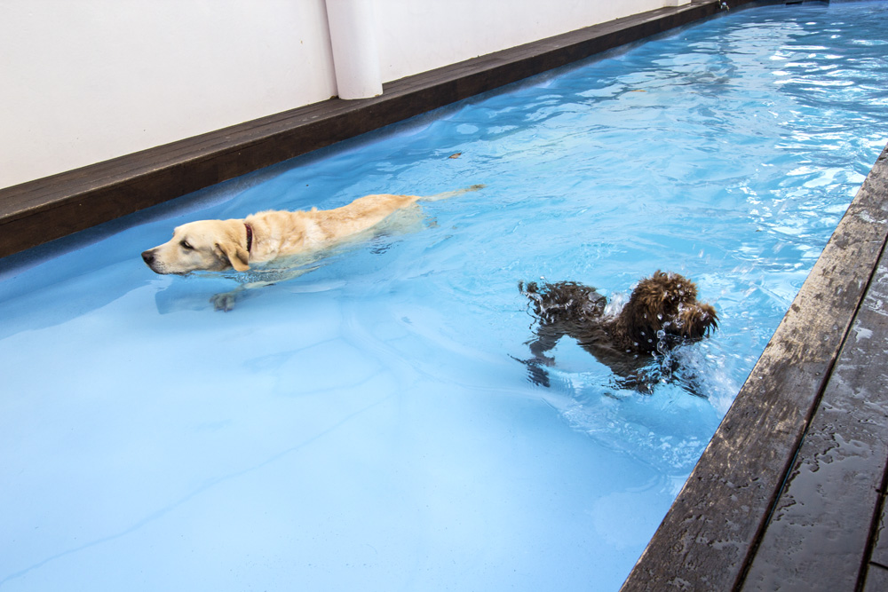 6 Dog Swimming Pools in Singapore | Sun Petgamart and U Petgamart | Vanillapup