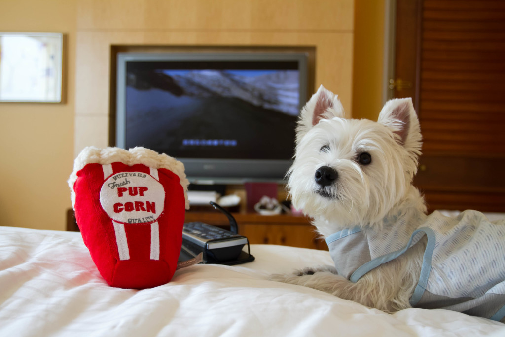 Dog-friendly Staycation at Conrad Hotel Bed | Vanillapup