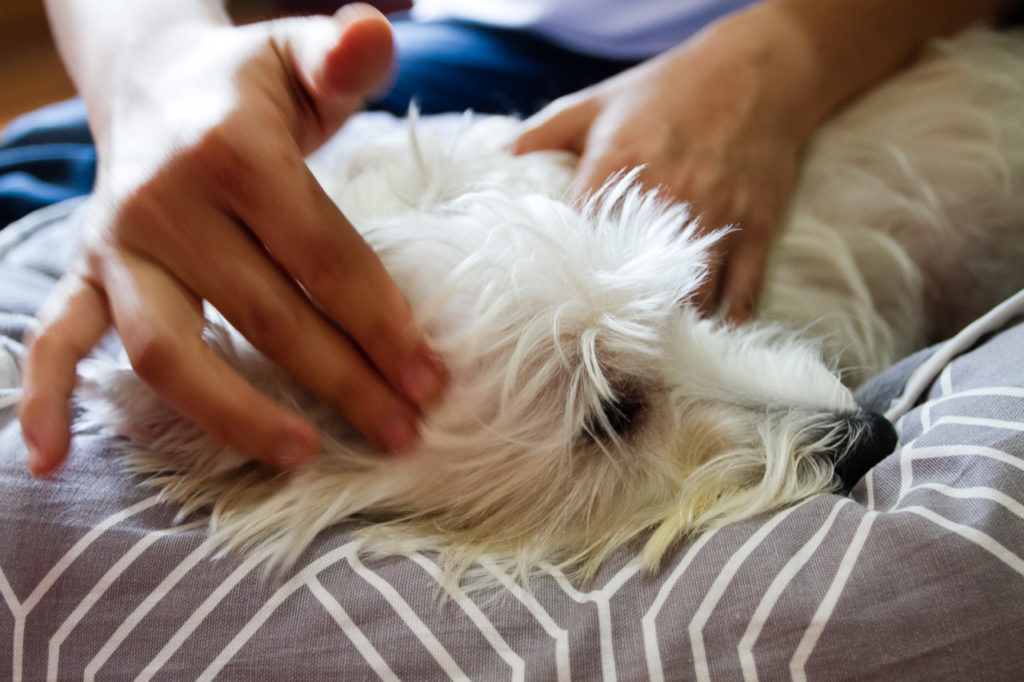 Paws Fur Life Canine Massage Review | Vanillapup