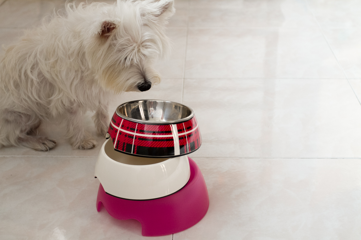 Choosing Dog Bowls | Vanillapup