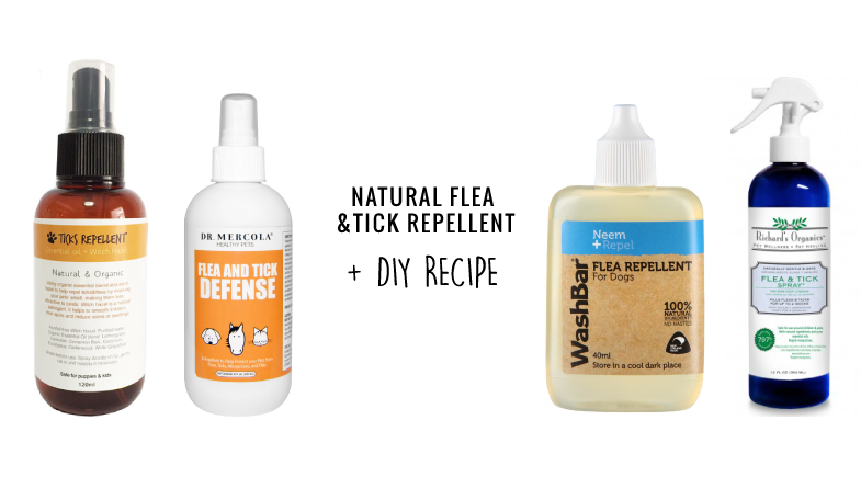 natural flea and tick repellents for dogs what to buy diy recipe vanillapup. Black Bedroom Furniture Sets. Home Design Ideas
