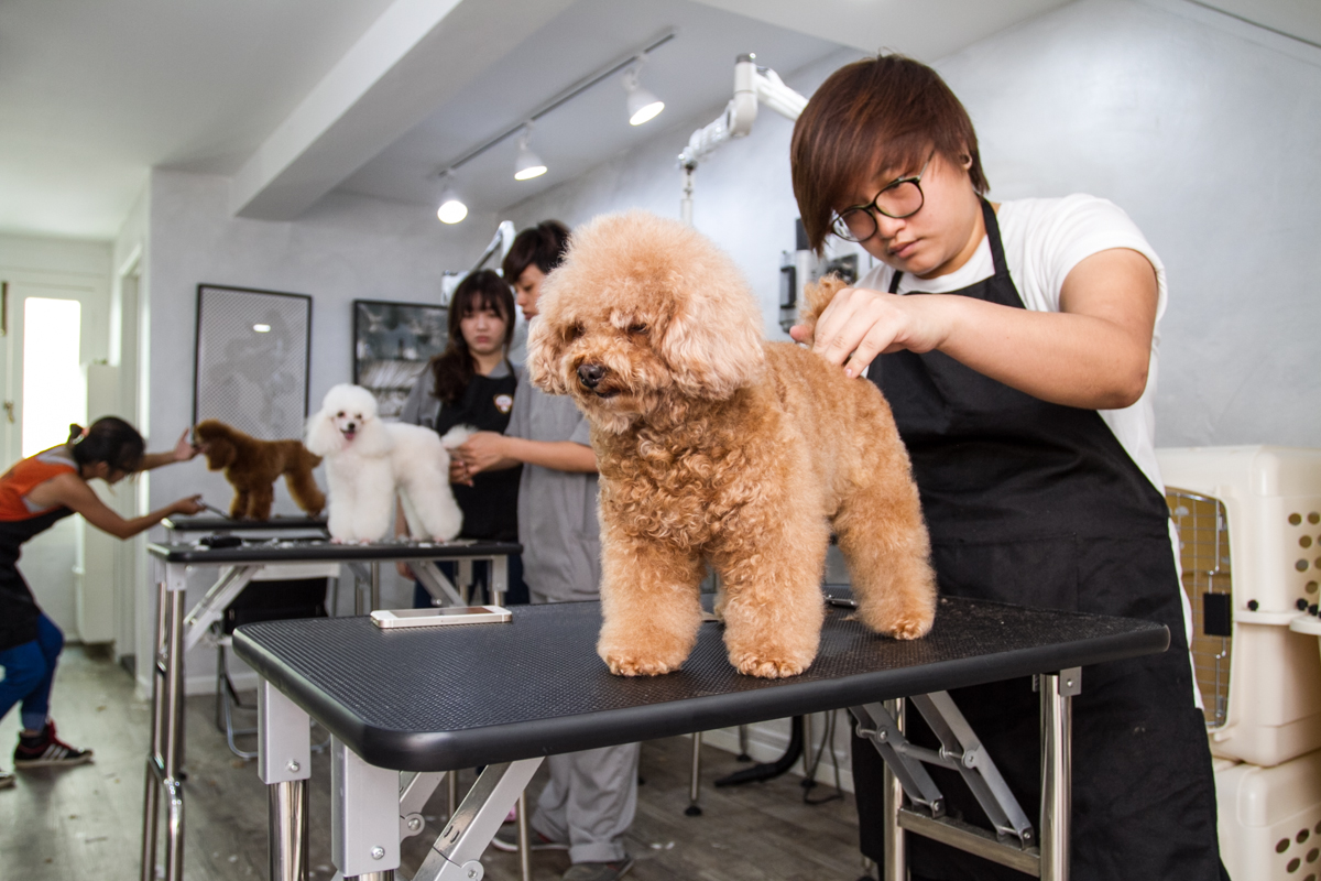 Furcraft Academy A Pet Grooming School For Everyone Vanillapup