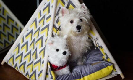 How to Make a Clean and Safe Home for Dogs   Vanillapup