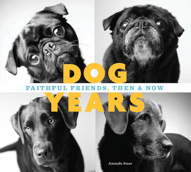 Dog Years Book | Vanillapup