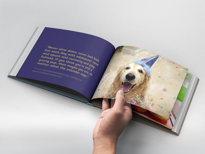 That Golden Dog Book | Vanillapup