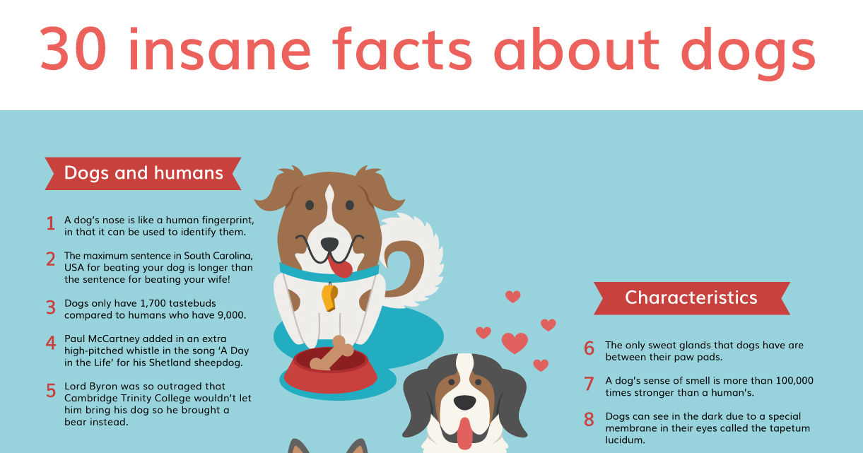 DogBuddy-Insane-Facts-About-Dogs