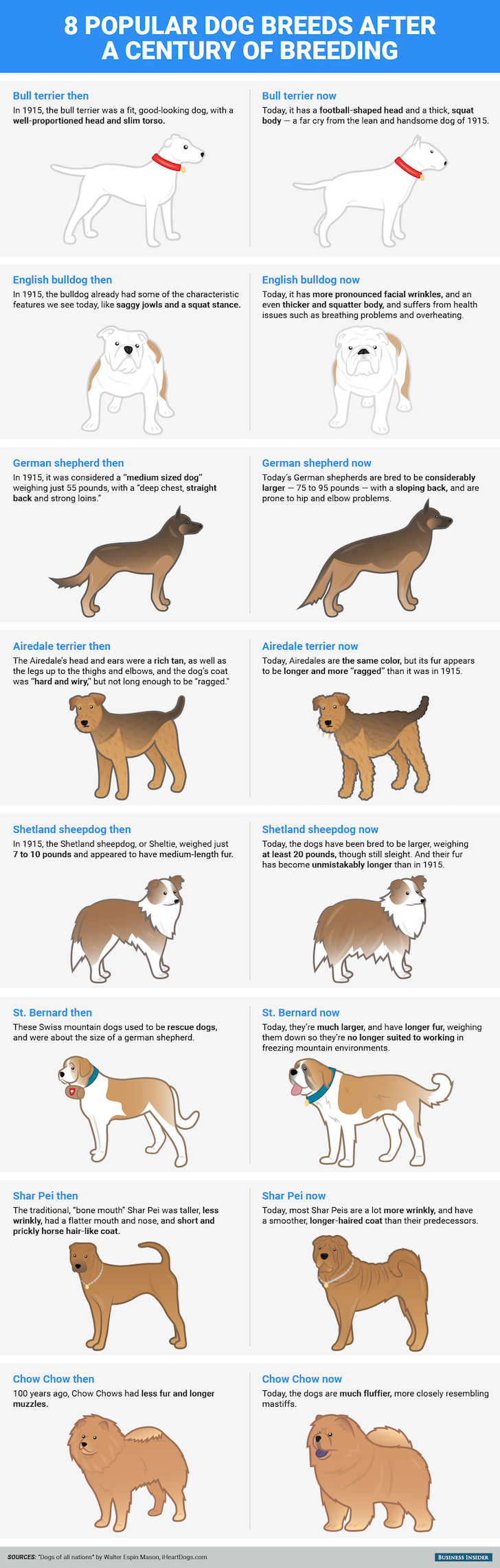Popular Dog Breeds Before And After 100 years | Vanillapup