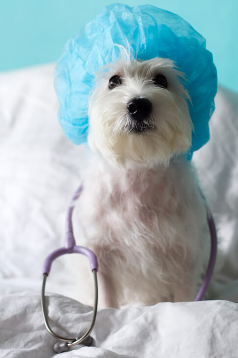 Things Dog Owners Should Know About Keyhole Surgery | Vanillapup
