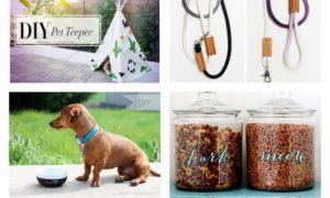 DIY Dog Projects | Vanillapup
