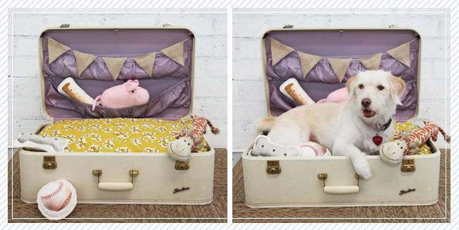 DIY Dog Suitcase Bed Ruche | Vanillapup