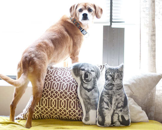 DIY Pet Portrait Pillows | Vanillapup