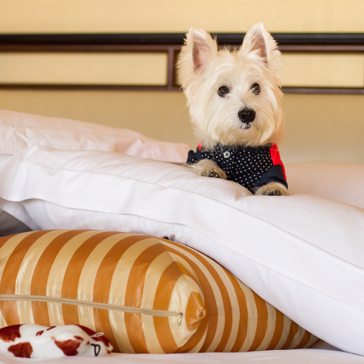 Pet-friendly Regent Singapore Hotel Staycation Bed | Vanillapup