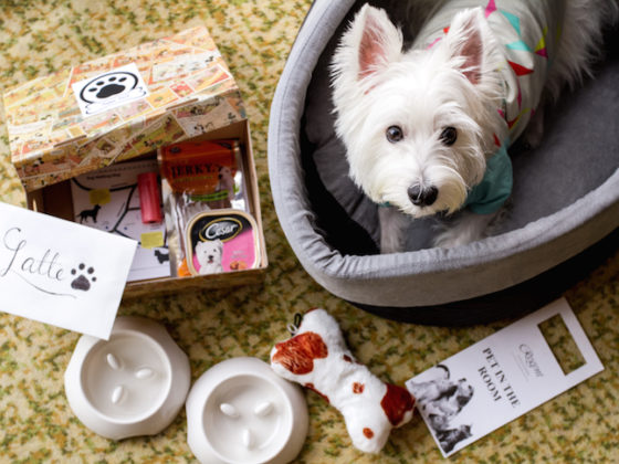 Pet-friendly Regent Singapore Hotel Staycation Puppy Pack | Vanillapup