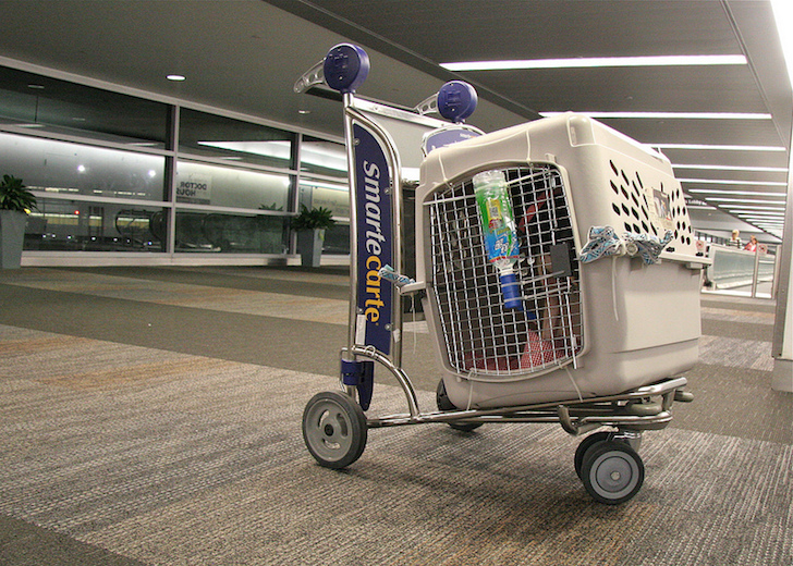 Dog Airline-approved Travel Crate | Vanillapup
