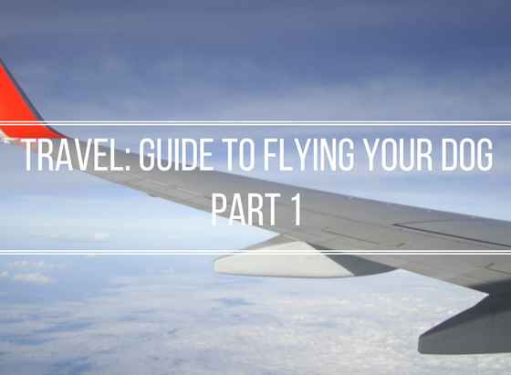 Pet Travel: Flying Your Dog Guide | Vanillapup