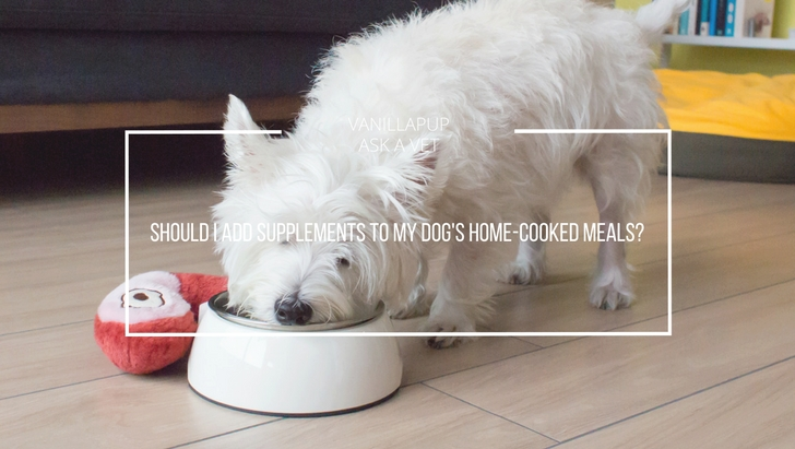 Should I Add Supplements to my Dog's Home-cooked Meals | Vanillapup