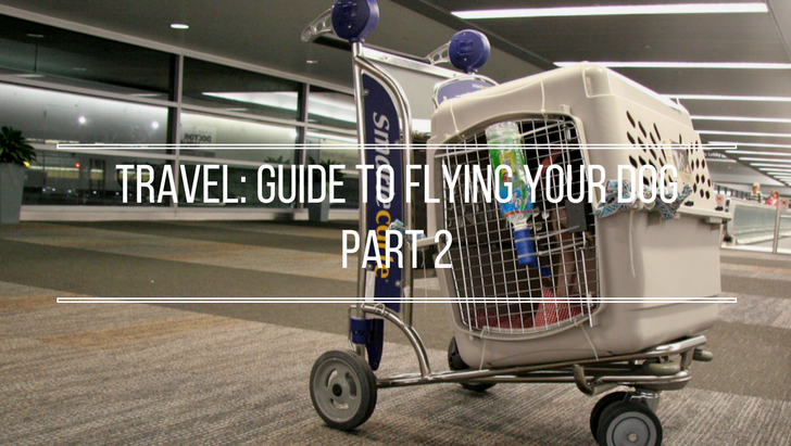 Pet Travel: Flying Your Dog Guide Part 2 | Vanillapup