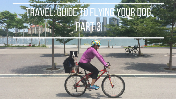 Pet Travel: Flying Your Dog Guide Part 3 | Vanillapup