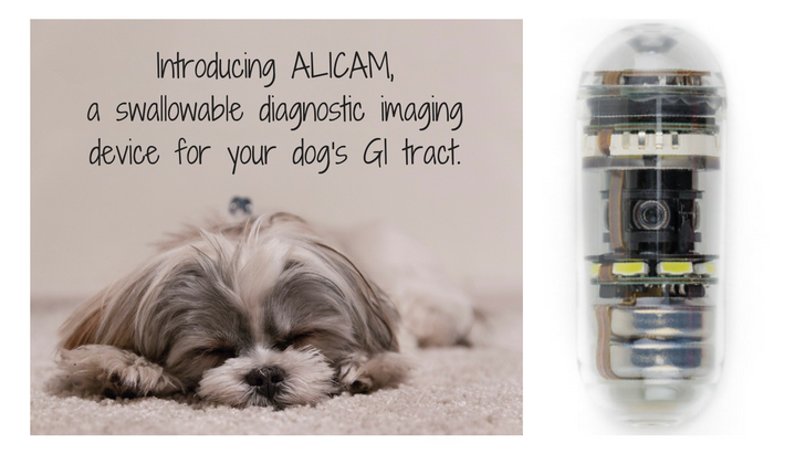 ALICAM diagnostic imaging device dog GI tract | Vanillapup