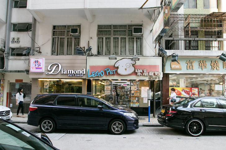 Victory Avenue Hong Kong Pet Shops | Vanillapup
