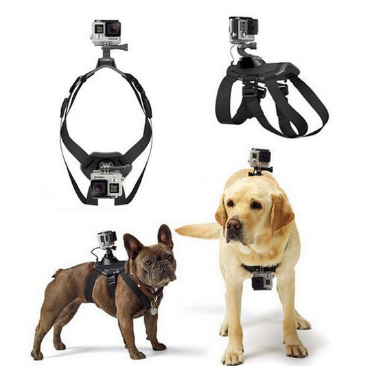 GoPro Dog Harness Taobao | Vanillapup