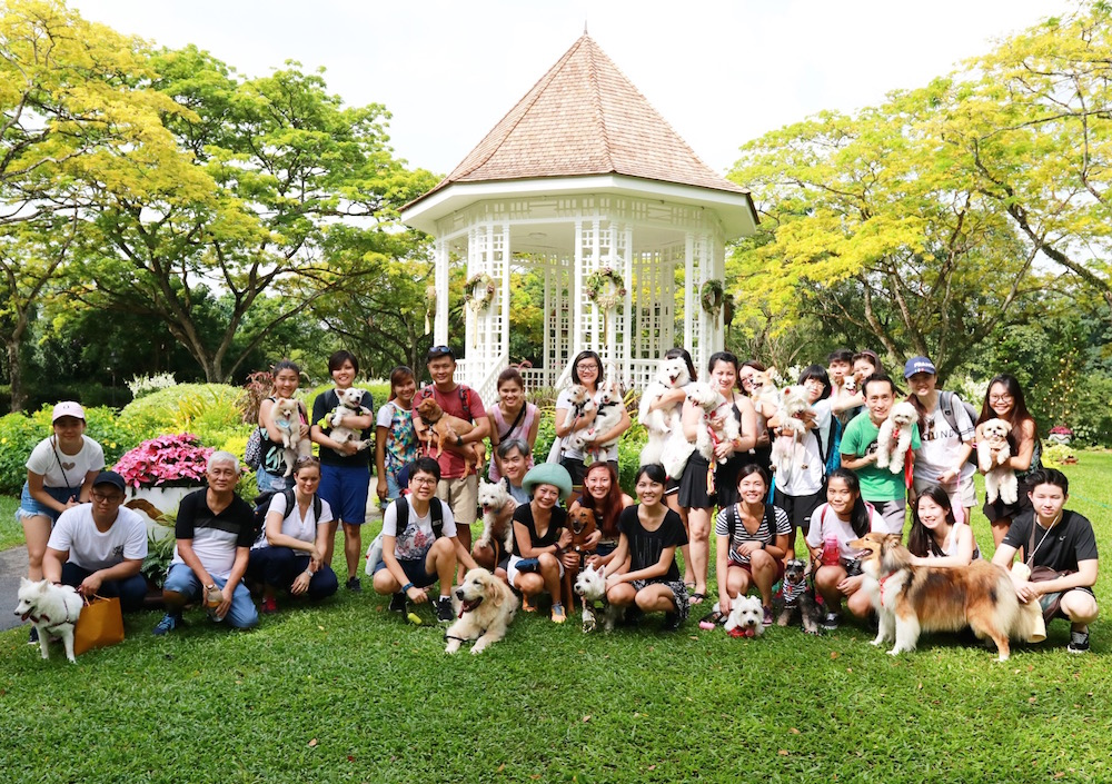 #my10ktoday Fun Walk with Vanillapup Group Photo | Vanillapup