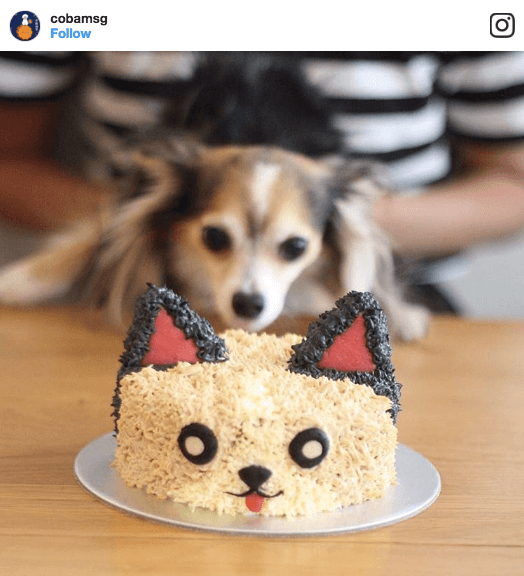 9 Dog Bakeries To Buy Your Dog's Next Birthday Cake