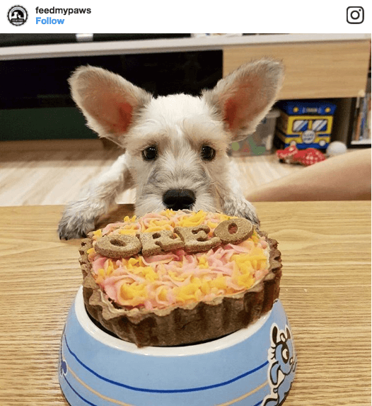 Feed My Paws Dog Tart | Vanillapup