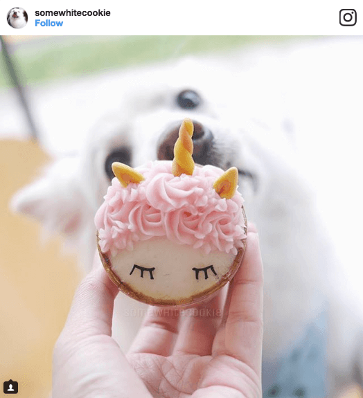 Feed My Paws Unicorn Pupcake | Vanillapup