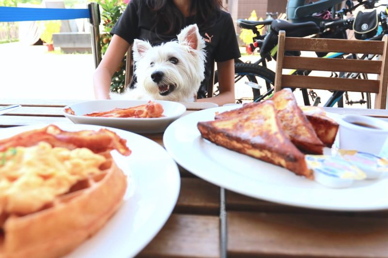 Dog-friendly Whisk and Paddle Food | Vanillapup