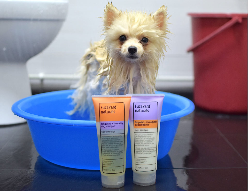 Bailey the Pom reviews FuzzYard Shampoo and Conditioner | Vanillapup