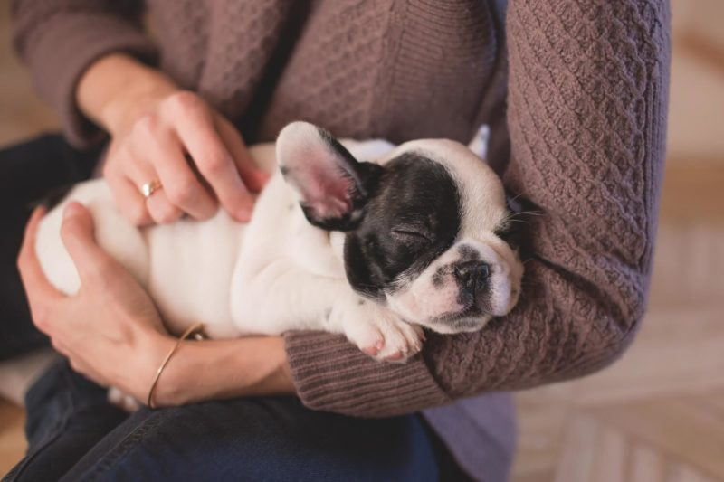 Questions to Ask Before Buying a Puppy From the Breeder  Vanillapup