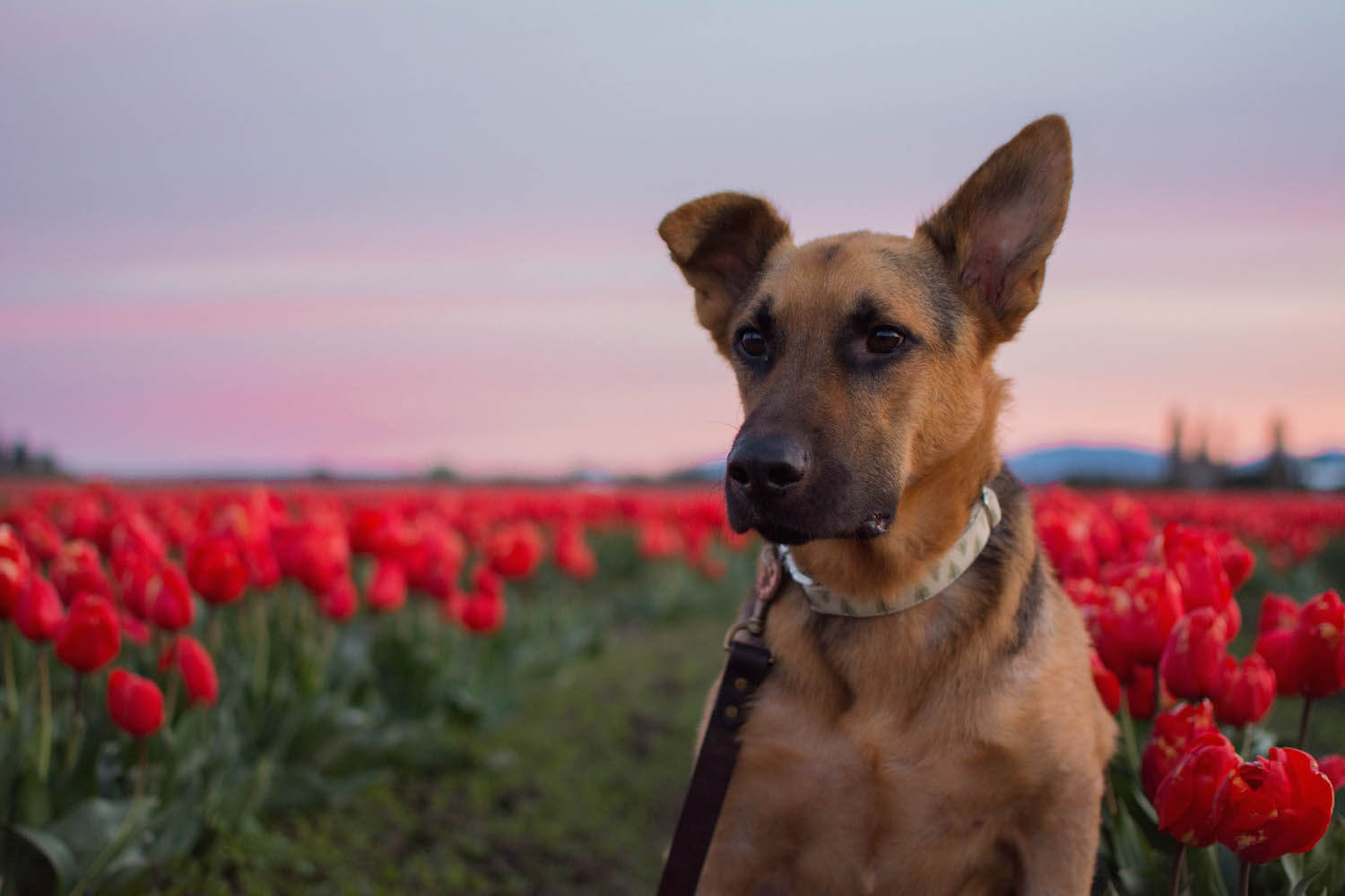 canine epilepsy tips and experience from an epileptic dog u0027s