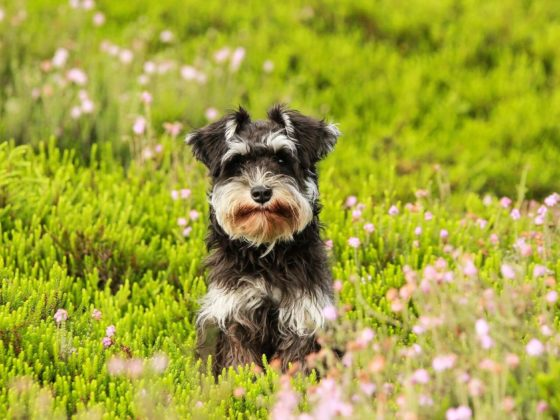 Dog Tip Tuesday: Tap Water May Be the Cause of Your Dog's Brown Beard Stains | Vanillapup
